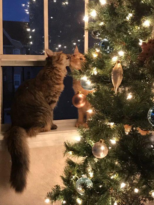 Gatos se besan al lado del arbol de navidad