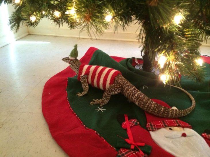 Lagartija vestida con sueter y gorro abajo del arbol de navidad