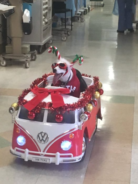 Perro paseandose en vagoneta de juguete todo decorado de navidad