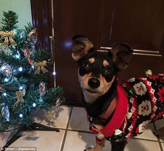 perrito con sueter navideño