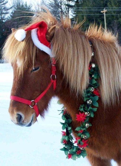 caballo con gorro de navidad