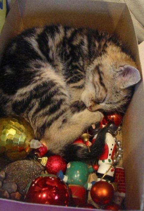 gato dormido en la caja de decoraciones navideñas