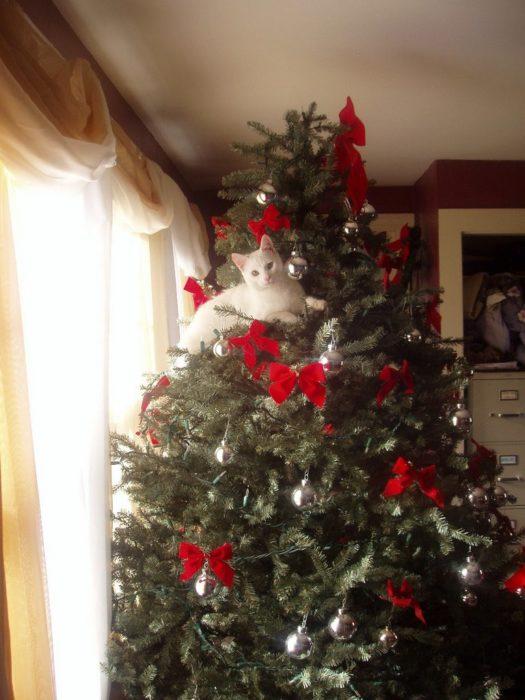 Gato acostado en las ramas del arbol de navidad