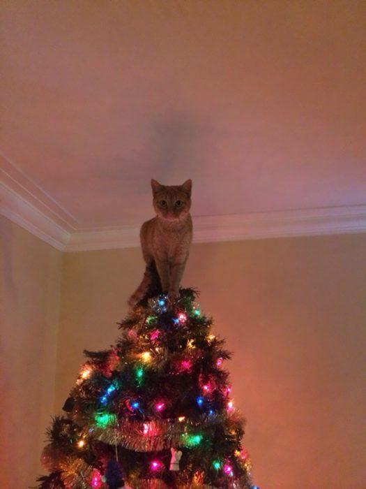 Gato en la punta del arbol de navidad