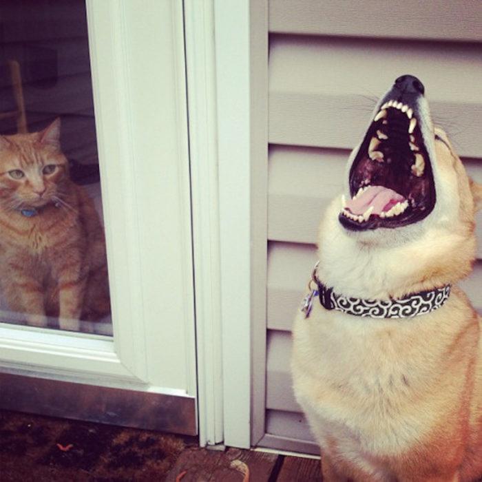 Perro riéndose
