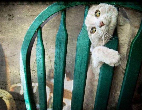 Gato atorado en la silla