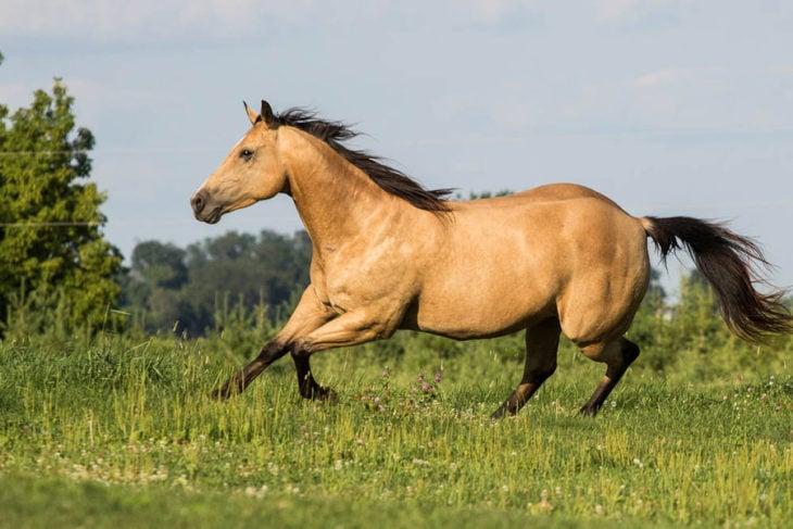 caballo ante