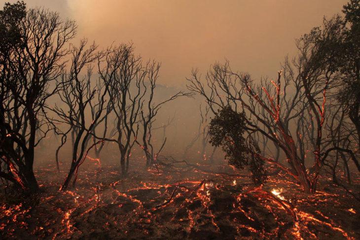 incendios originados por el cambio climático