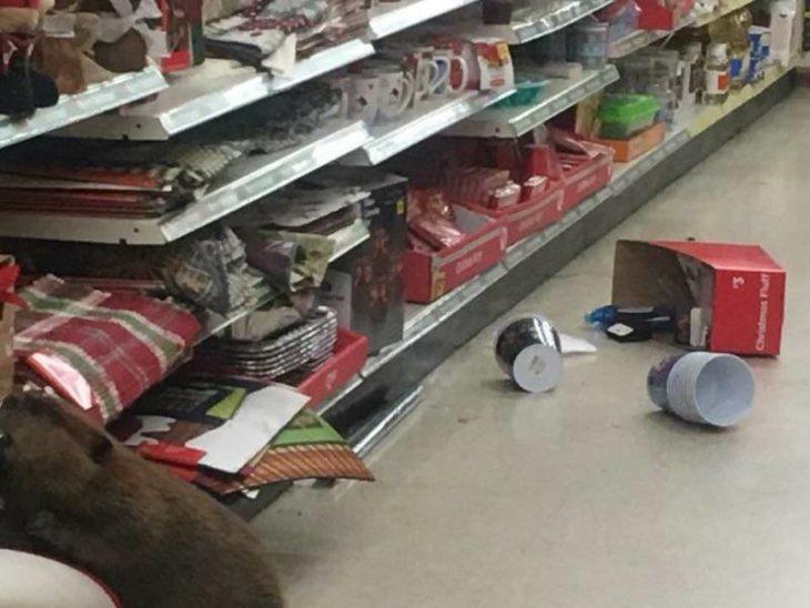 castor derribó productos navideños en tienda departamental