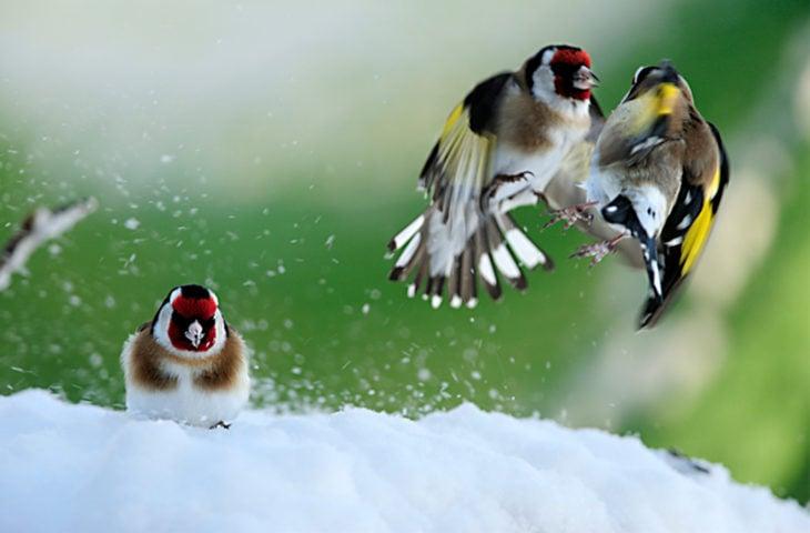 Tres amigos en la nieve