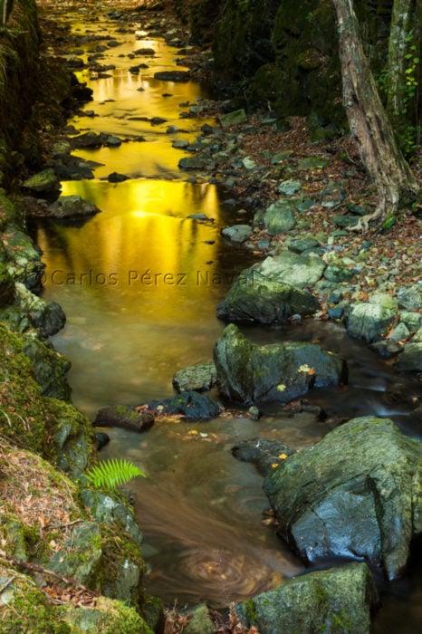 Fotografía del agua en el río