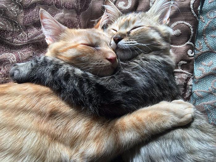 Gatos dormidos abrazados