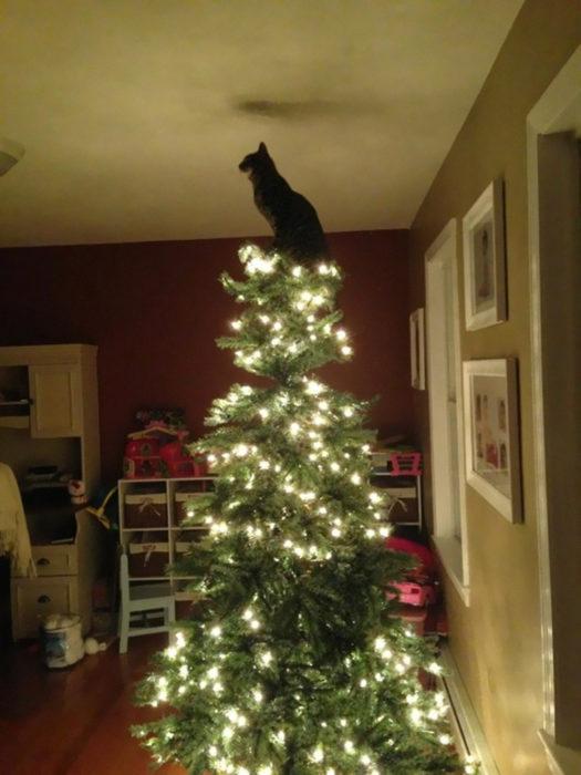 Gato en la punta del árbol de navidad