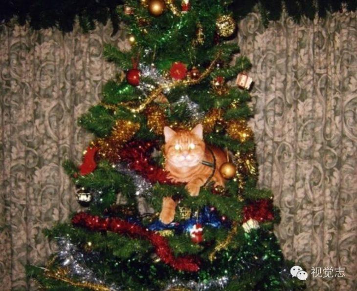 Gato con ojos brillosos acostado en el árbol de navidad