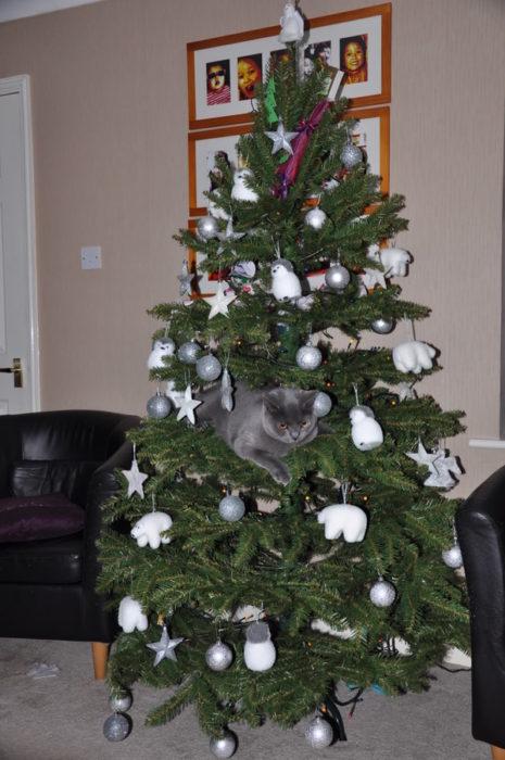 Gato gris jugando con las esferas del árbol
