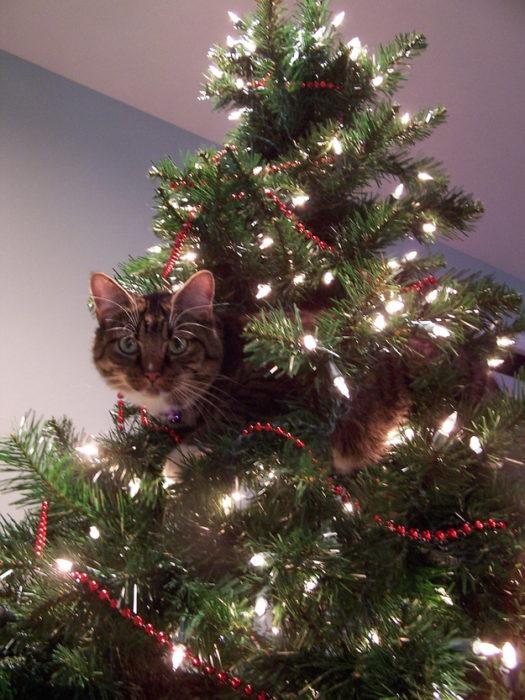 Gato acostado y el árbol de navidad prendido