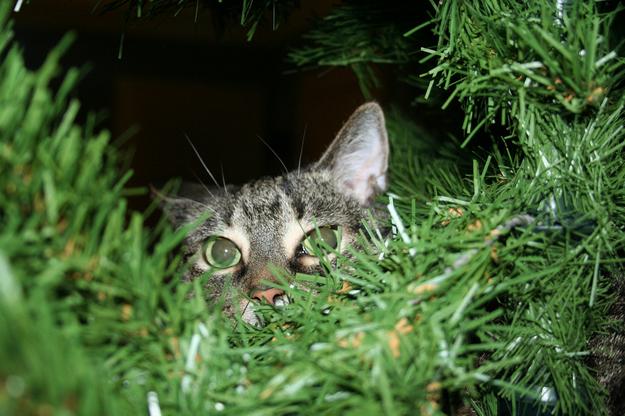 Gato viendo a la cámara desde el árbol navideño