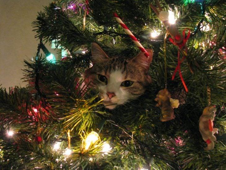 Gato acurrucado en el árbol de Navidad