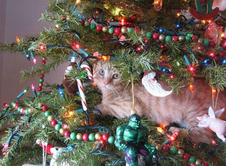 Gato acostado tranquilamente en el árbol navideño