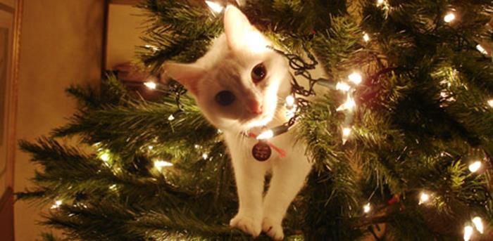 Gato asomándose en el árbol de navidad