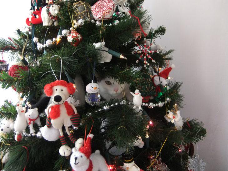 Gato asomado de dentro del árbol de navidad