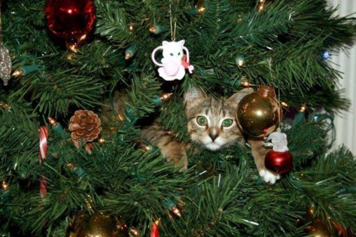 Gato acostado en el árbol de navidad