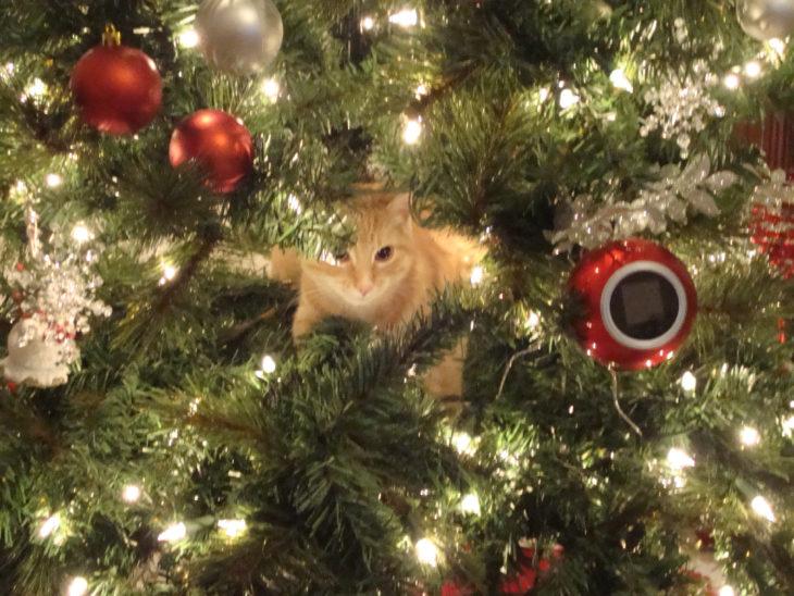 Gato acostado adentro del árbol de navidad