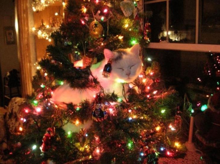 Gato blanco dormido en el árbol de Navidad