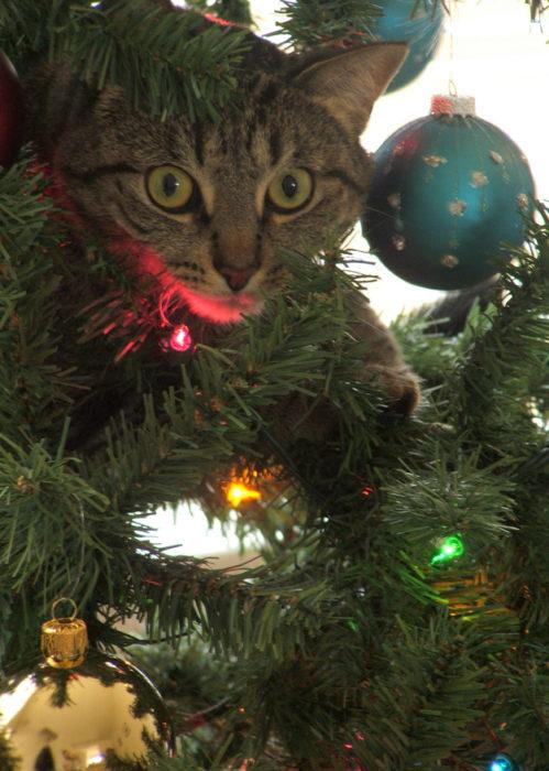 Gato en el árbol de navidad