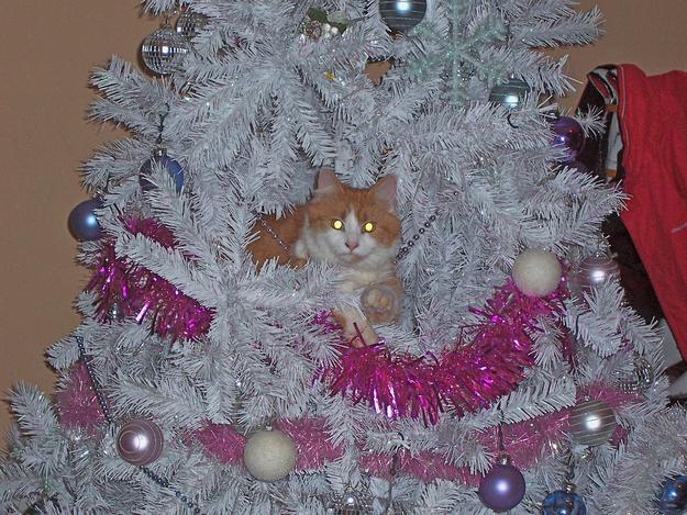 Gato café acostado en un árbol navideño blanco