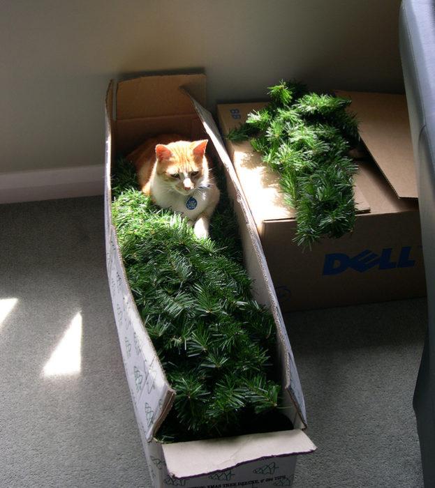 Gato acostado en la caja en donde está guardado el árbol de navidad