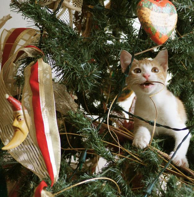 Gatito jugando con los adornos del árbol de navidad