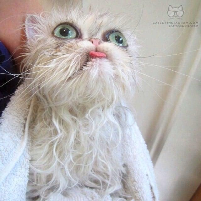 Gato mojado con cara de asustado