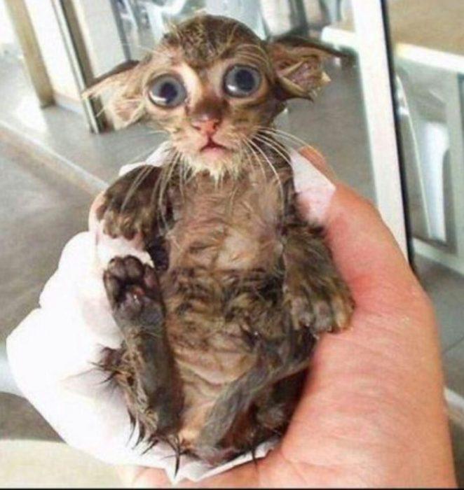 Tierno gatito mojado con cara de asustado