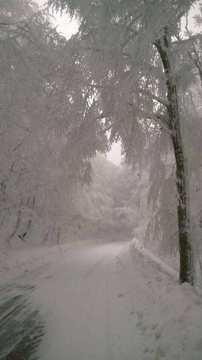 Neblina en medi de un lugar nevado