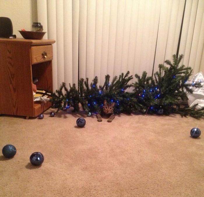 gato tiró árbol de navidad