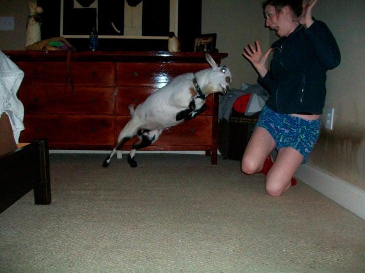 ataque animal