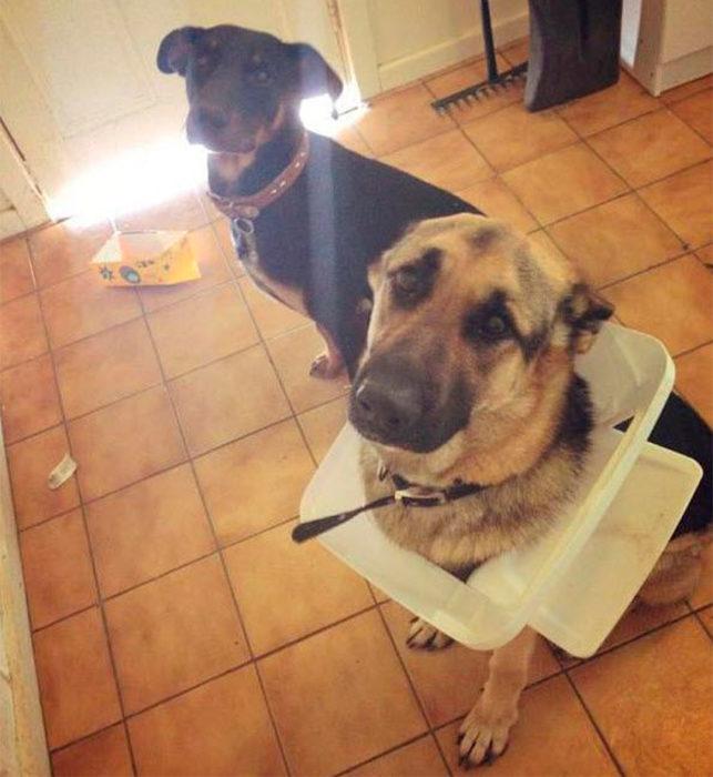 perros descubiertos