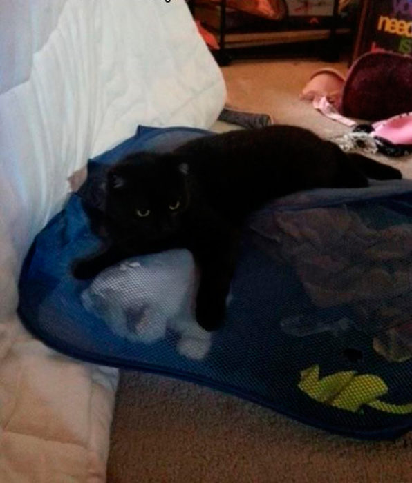 gato atrapó a otro gato