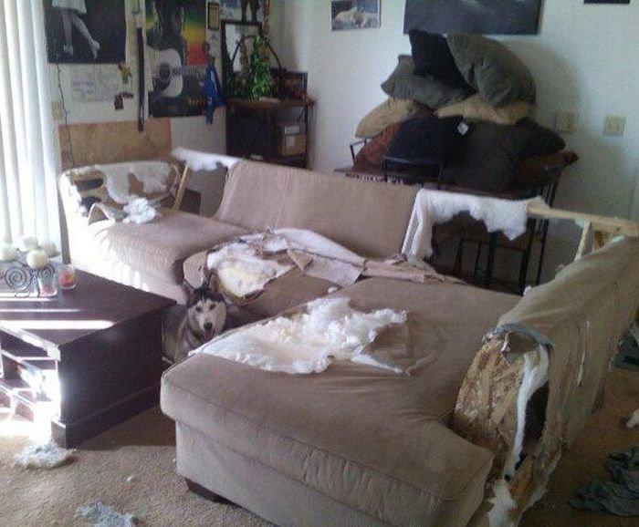 un perro destruyó una sala