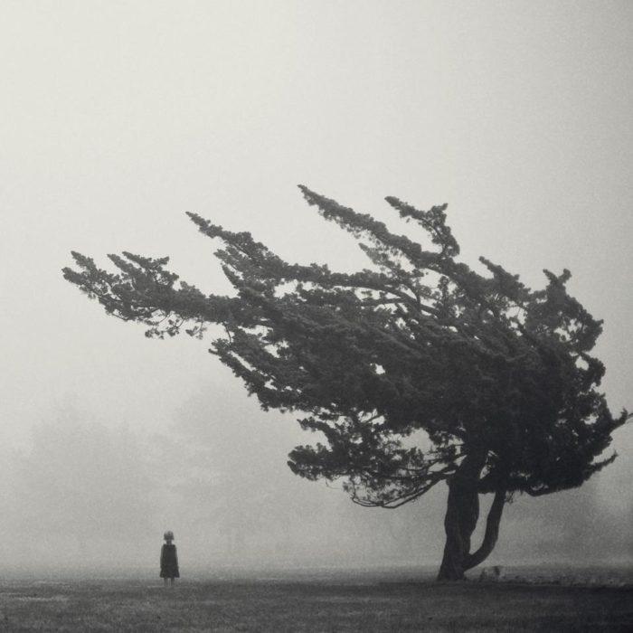 árbol torcido