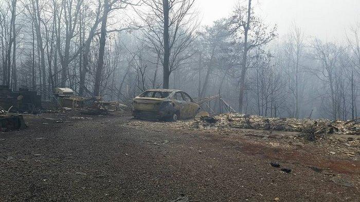 Bosque después de un incendio
