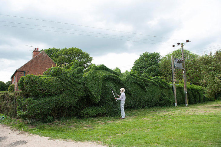 hombre junto a un enorme árbol en forma de dragón