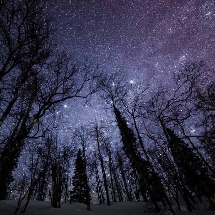 Bosque nevado estrellado