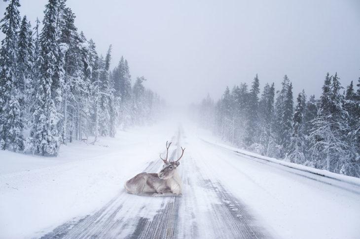 Reno en medio de un camino nevado