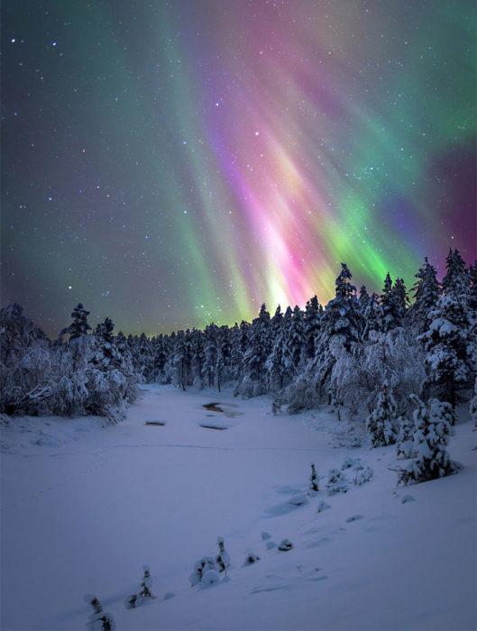 Aurora boreal en bosque nevado