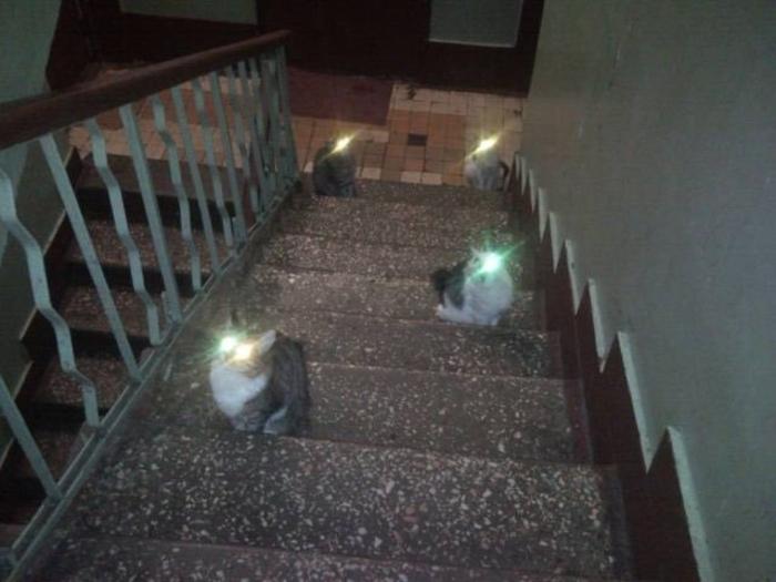 Los Gatos pueden controlar tu mente