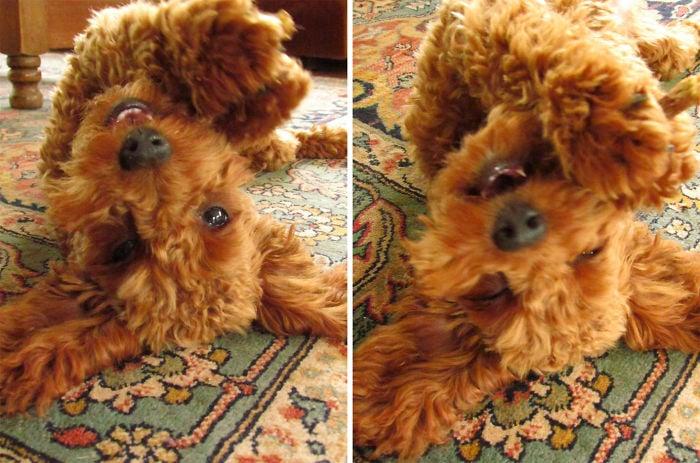 Perro jugueton