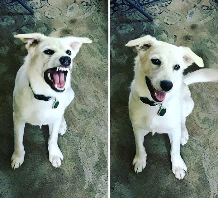 Perro enojado, perro contento