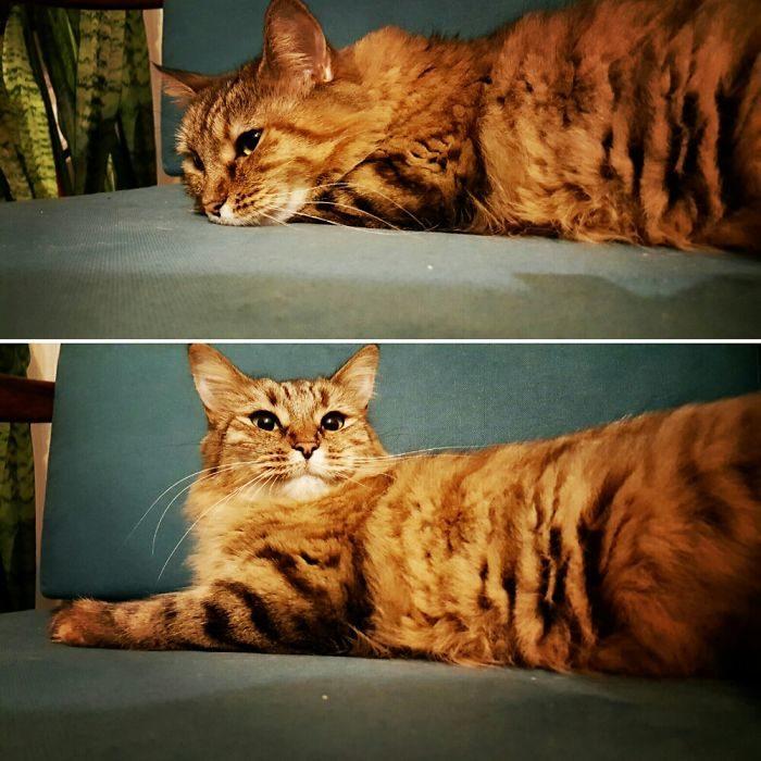 Gato acostado, y otra volteando ala cámara
